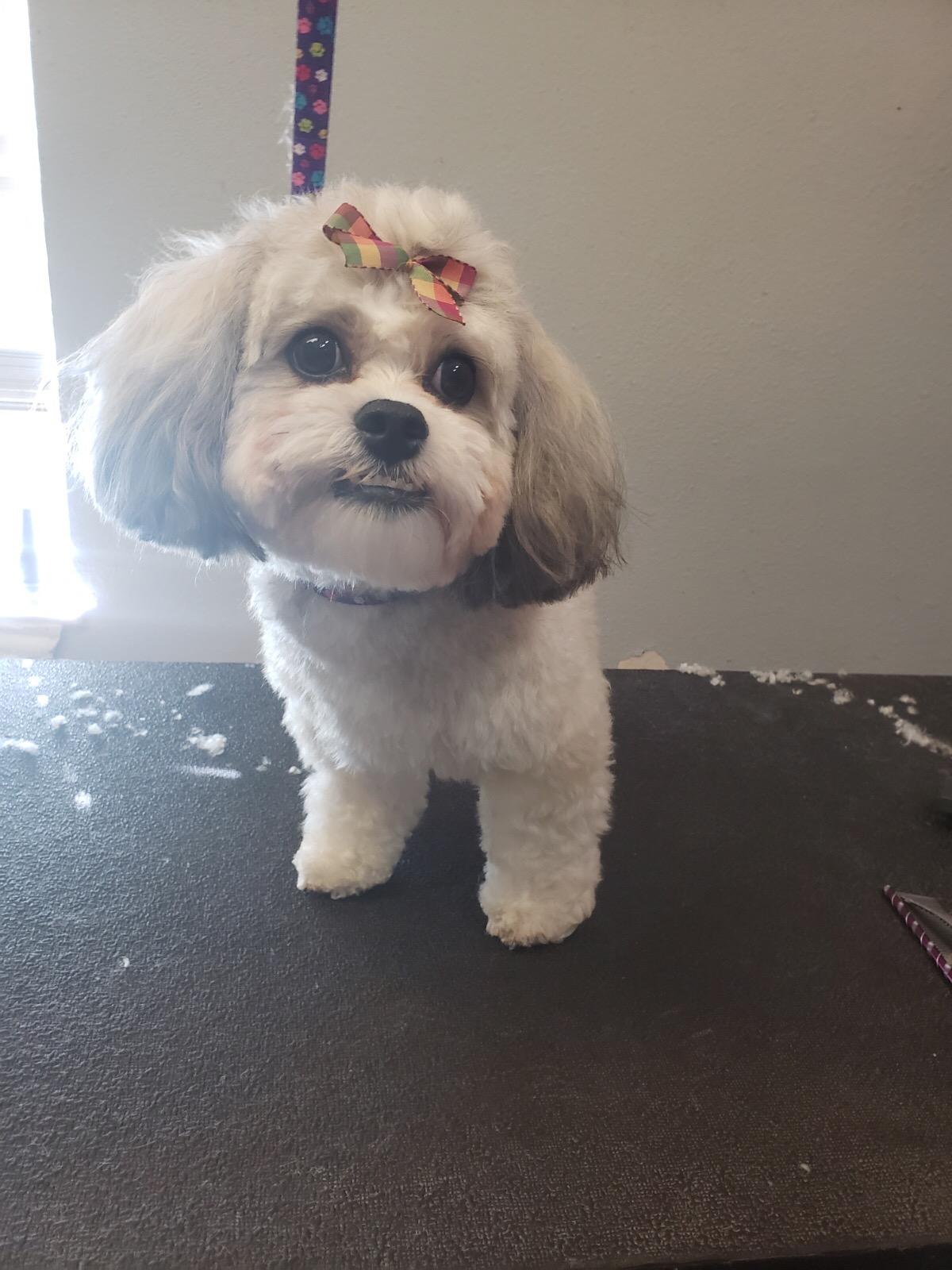 Dog Grooming Prosper