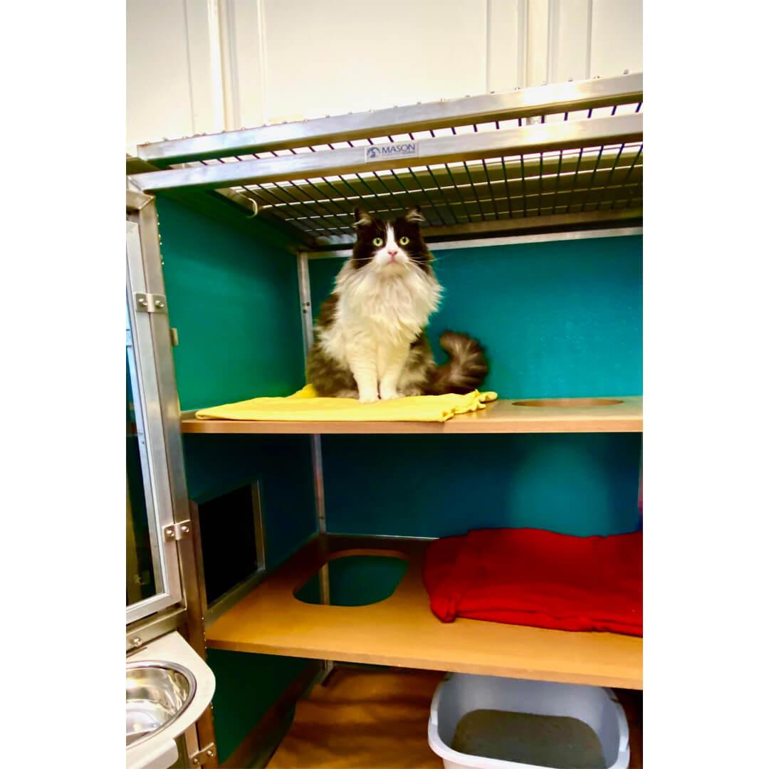 Cat Condo 3